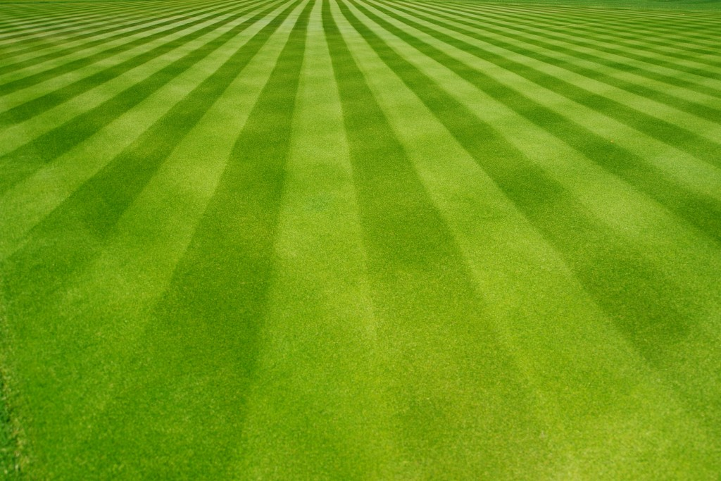 Perfectly striped freshly mowed garden lawn in summer